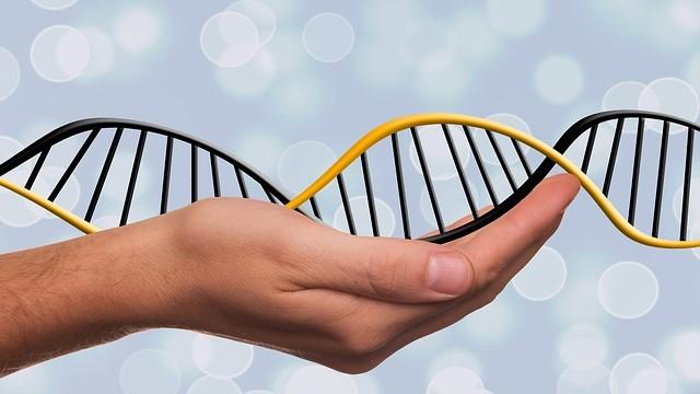 Бесплатная консультация генетика перед ПГД!